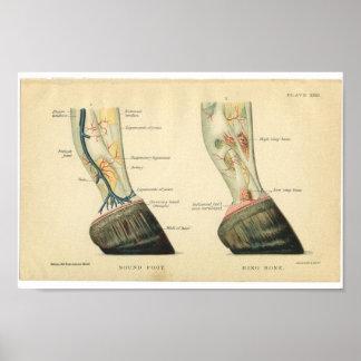 De vintage Hoef van de Druk van de Anatomie van Poster