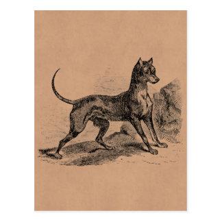 De vintage Hond 1800s Dobermans van Doberman Briefkaart