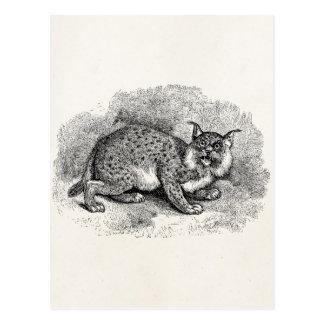 De vintage Illustratie van de Lynx van de Kat van Briefkaart
