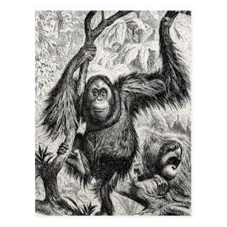 De vintage Illustratie van de Orangoetan - Aap Briefkaart