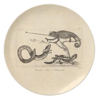 De vintage Illustratie van de Salamander van het Melamine+bord