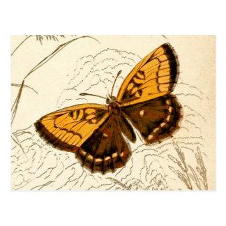 De vintage Illustratie van de Vlinder, Goud en Briefkaart