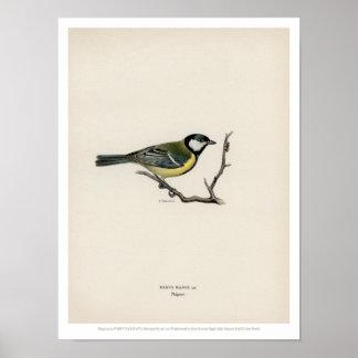 De vintage Illustratie van de Vogel - de Koolmees Poster