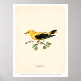 De vintage Illustratie van de Vogel - Gouden Poster