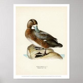 De vintage Illustratie van de Vogel - Grotere Poster