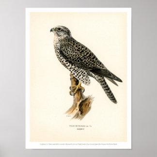 De vintage Illustratie van de Vogel - het mannetje Poster