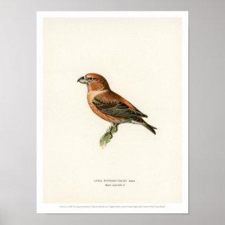 De vintage Illustratie van de Vogel - Papegaai Poster