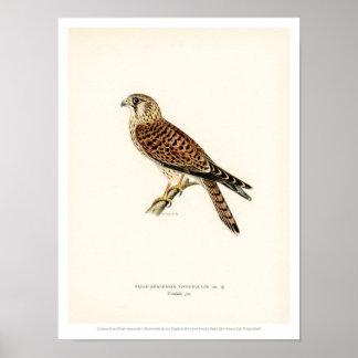 De vintage Illustratie van de Vogel - Poster