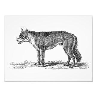 De vintage Illustratie van de Wolf - de Sjabloon Foto Afdruk