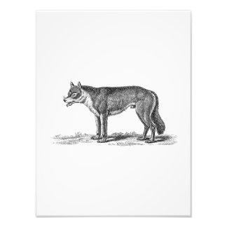De vintage Illustratie van de Wolf - de Sjabloon Foto Afdrukken