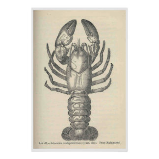 De vintage Illustratie van Rivierkreeften (1896) Poster