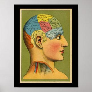De vintage Menselijke Druk van de Frenologie Poster