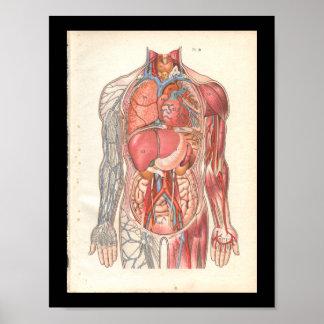 De vintage Menselijke Interne Druk van de Anatomie Poster