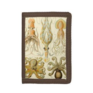 De vintage Pijlinktvis Gamochonia van de Octopus
