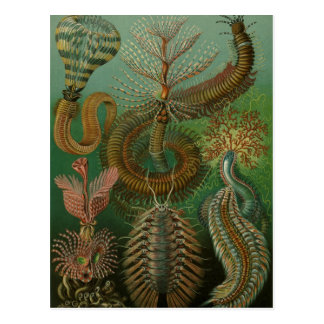 De vintage Ringwormen Chaetopoda van Wormen door Briefkaart