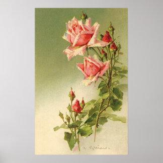 De vintage Roze Rozen van de Tuin voor Poster