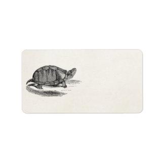 De vintage Schildpad van de Modder - de Etiket