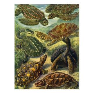 De vintage Schildpadden en de Schildpadden van het Briefkaart