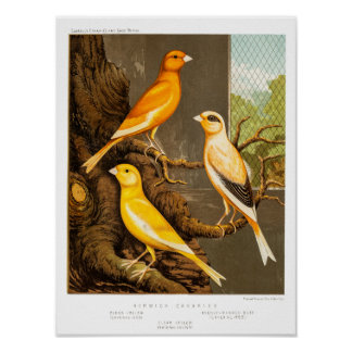 De vintage Sjabloon de Canarische Eilanden van de Poster