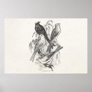 De vintage Sjabloon van de Vogels van de Poster
