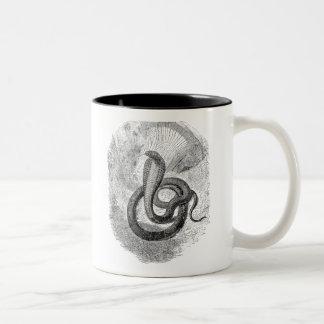 De vintage Slang van Naia Haje - de Tweekleurige Koffiemok