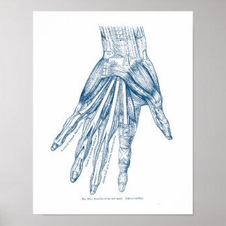 De vintage Spieren van de Kunst van de Anatomie Poster