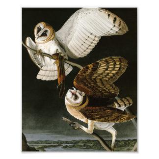 De vintage Uilen Illustratation van de Schuur (Aud Fotografische Afdruk