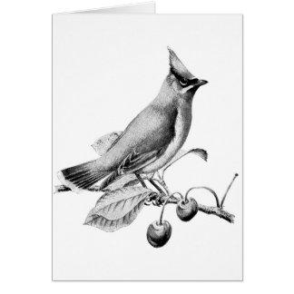 De vintage Vogel van Waxwing van de Ceder (Spatie Briefkaarten 0
