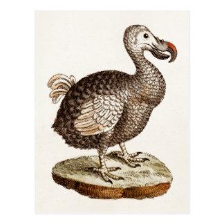 De vintage Vogels van het Dodo van de Illustratie Briefkaart