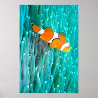 De Vissen van de clown Poster