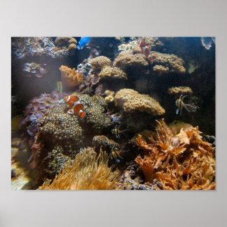 De Vissen van de ertsader - Clownfish Poster