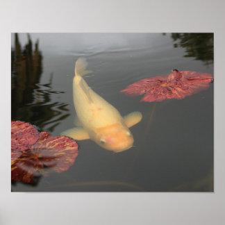 De vissen van Koi Poster