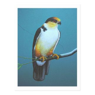 De Vlieger van de parel Briefkaart