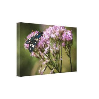 De vlinder van de lente op wildflowers canvas afdruk