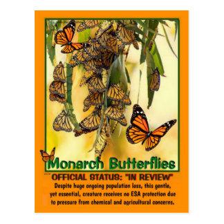 De vlinder van de Monarch is bedreigd - Briefkaart