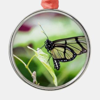De Vlinder van de Vleugel van het glas Zilverkleurig Rond Ornament