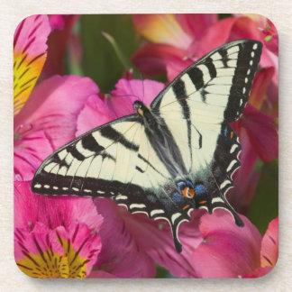 De Vlinder van Swallowtail op roze Bier Onderzetter