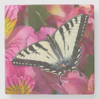De Vlinder van Swallowtail op roze Stenen Onderzetter