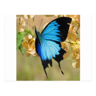 De Vlinder van Ulysses Briefkaart