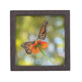 De Vlinders van de monarch op Wildflowers Premium Bewaar Doosje
