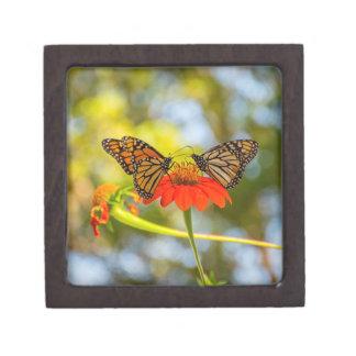 De Vlinders van de monarch op Wildflowers Premium Opbergdoosjes