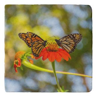 De Vlinders van de monarch op Wildflowers Trivet