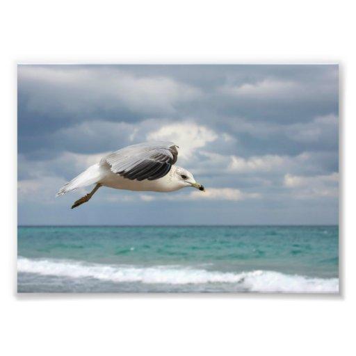 De Vlucht van de zeemeeuw Foto Afdruk