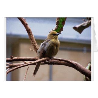 De vogel van de Dierentuin van Londen Kaart