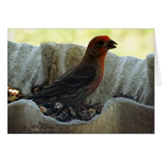 De Vogel van de roodharige Kaart