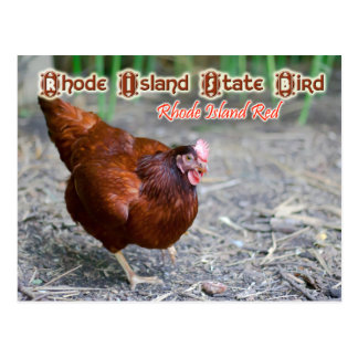 De Vogel van de Staat van Rhode Island: Het Rood Briefkaart