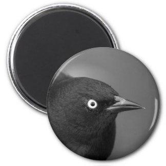 De vogel van Hitchcock Magneet