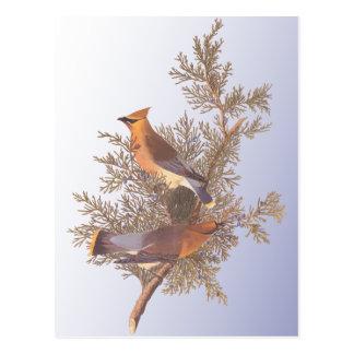 De Vogel van Waxwing van de Ceder van Audubon Briefkaart