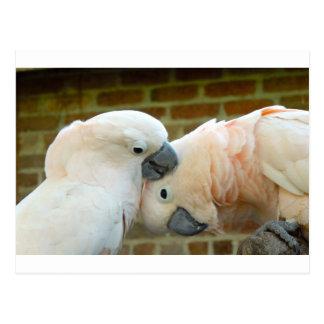 De Vogels van de liefde Briefkaart