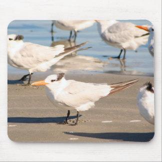 De Vogels van het strand mousepad Muismat